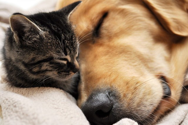 There has been a huge demand for pets during lockdown, particularly cats and dogs.