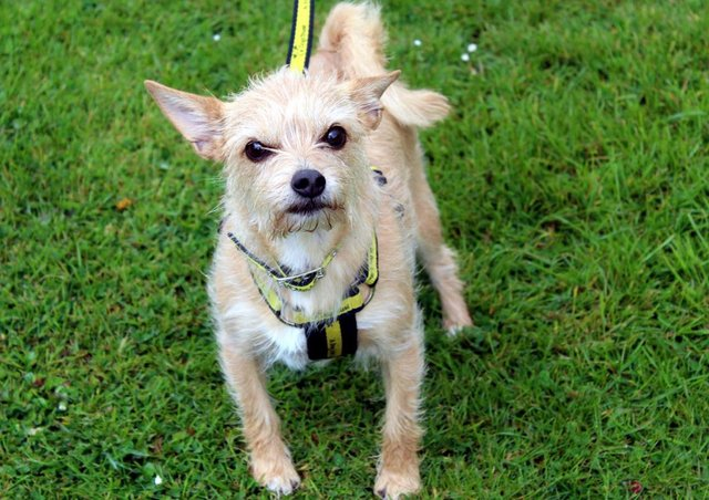 Chihuahua Tessa is a dog who loves her home comforts and would like to find a potential owner who will be around most of the day
