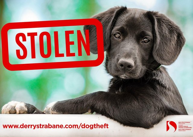 Dog owners have been urged to be vigilant.